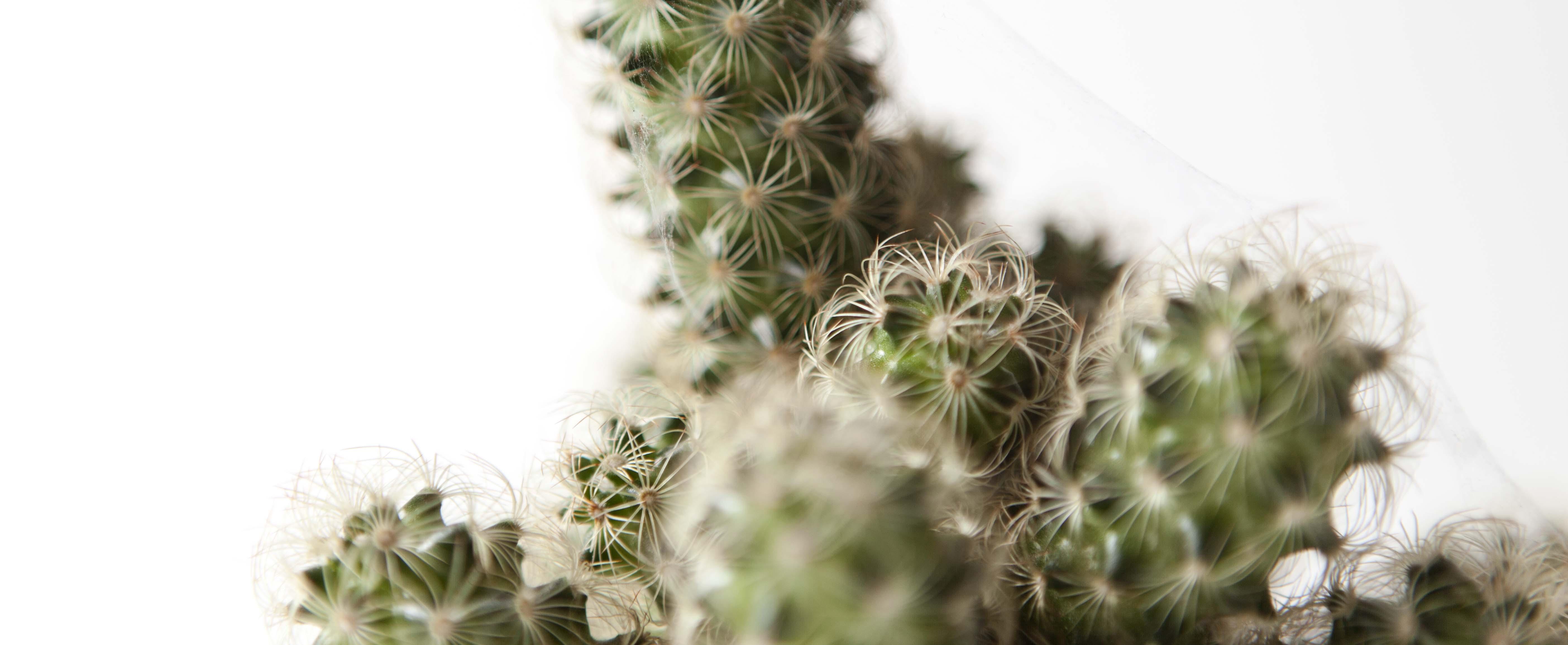 kaktus-studio-fotografering